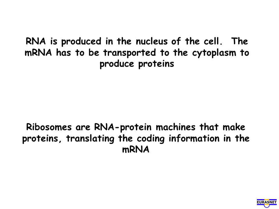 RNA is produced in the nucleus of the cell. The mRNA has to be transported to the cytoplasm to produce proteins Ribosomes are RNA-protein machines tha