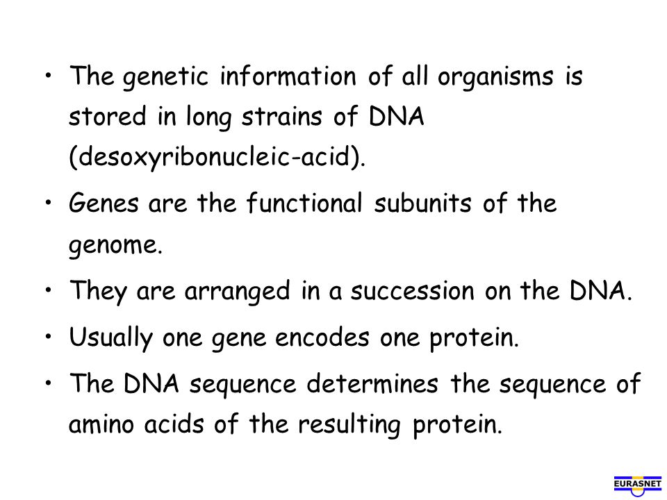 The genetic information of all organisms is stored in long strains of DNA (desoxyribonucleic-acid). Genes are the functional subunits of the genome. T