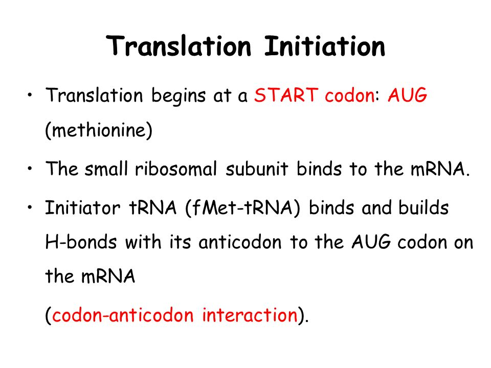 Translation Initiation Translation begins at a START codon: AUG (methionine) The small ribosomal subunit binds to the mRNA. Initiator tRNA (fMet-tRNA)