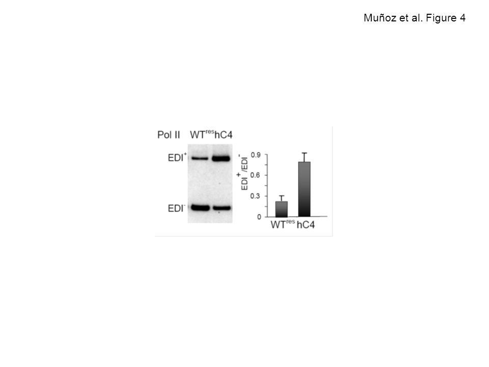 Muñoz et al. Figure 4
