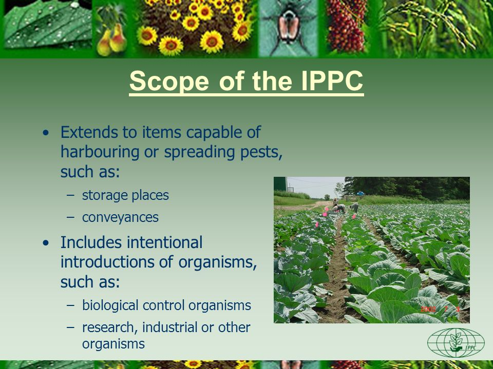Scope of the IPPC Extends to items capable of harbouring or spreading pests, such as: –storage places –conveyances Includes intentional introductions