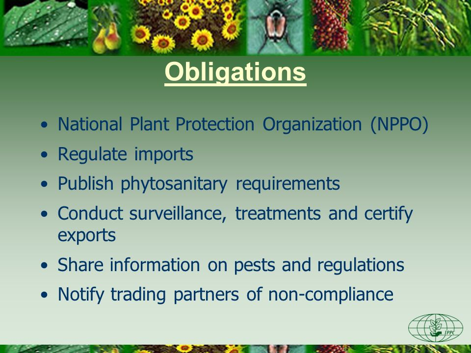 Obligations National Plant Protection Organization (NPPO) Regulate imports Publish phytosanitary requirements Conduct surveillance, treatments and cer