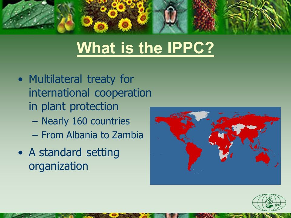 Aim of the IPPC Prevent introduction & spread of pests Promote fair & safe trade Protect plant life
