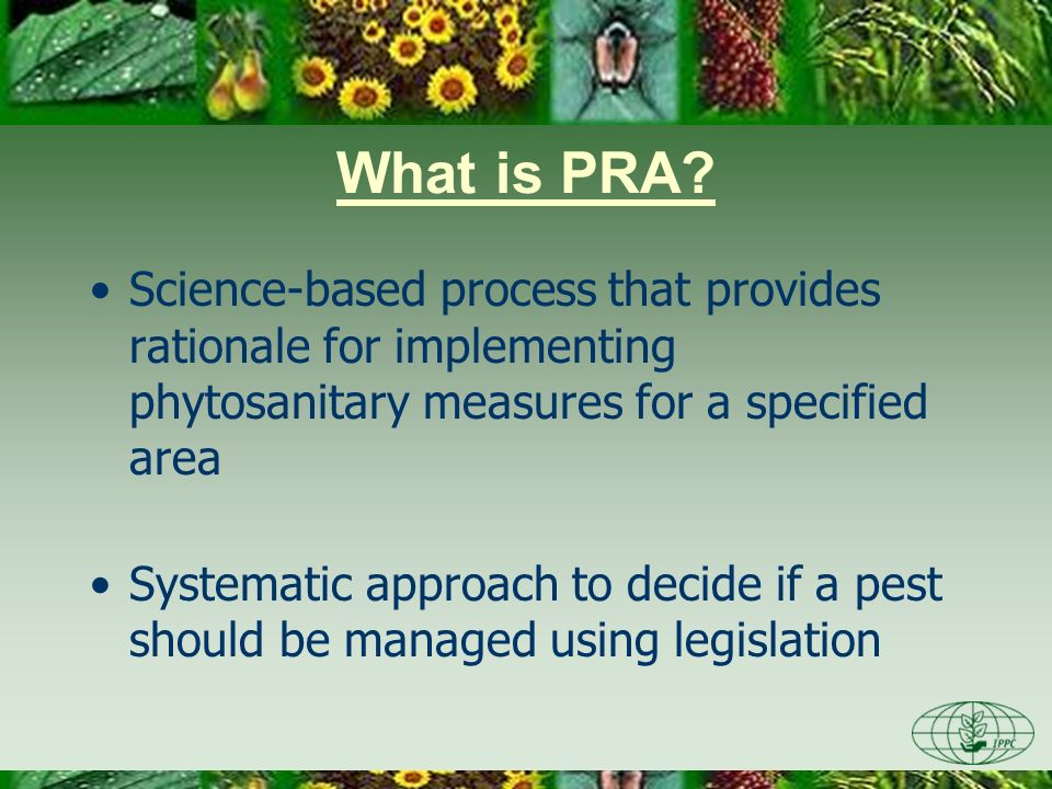 What is PRA? Science-based process that provides rationale for implementing phytosanitary measures for a specified area Systematic approach to decide