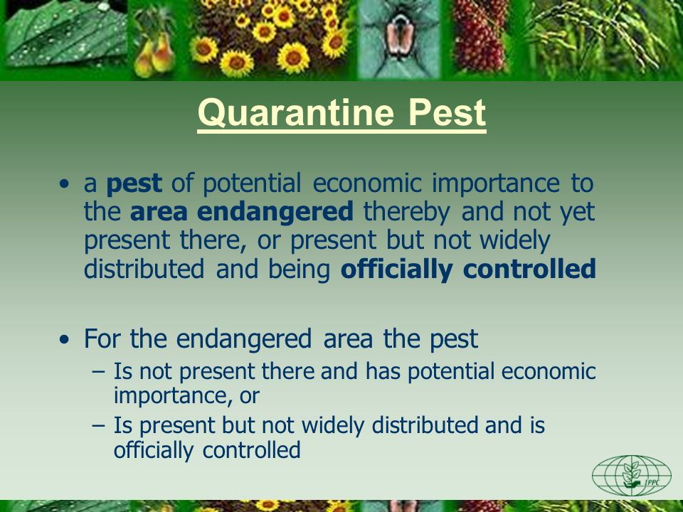 Quarantine Pest a pest of potential economic importance to the area endangered thereby and not yet present there, or present but not widely distribute