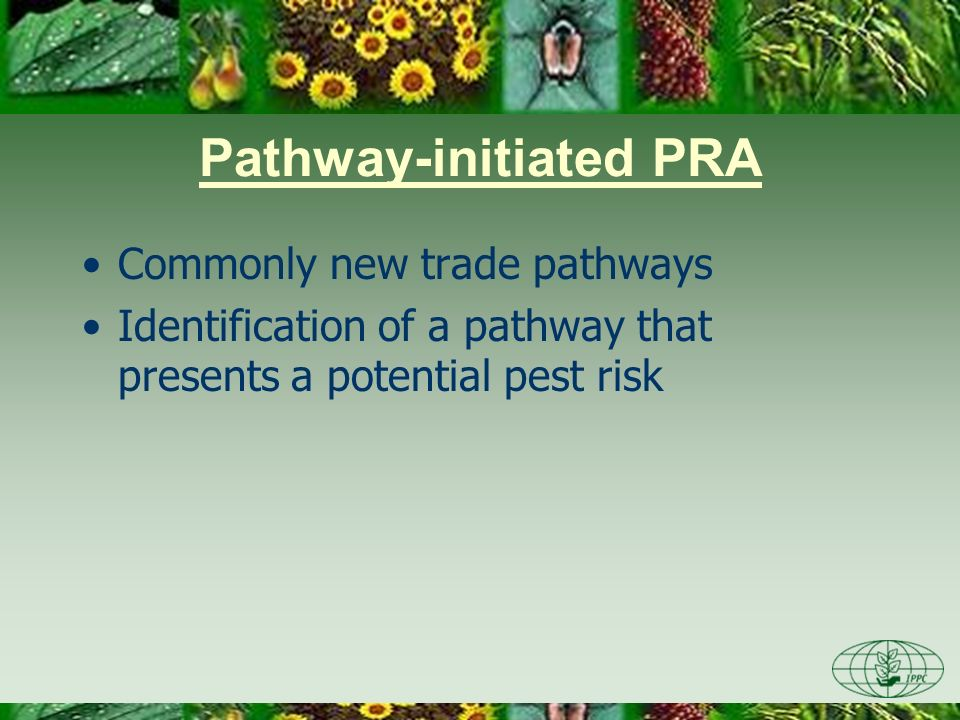 Pathway-initiated PRA Commonly new trade pathways Identification of a pathway that presents a potential pest risk
