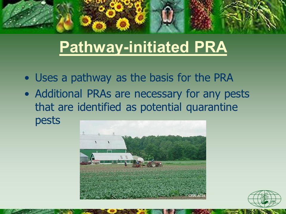 Pathway-initiated PRA Uses a pathway as the basis for the PRA Additional PRAs are necessary for any pests that are identified as potential quarantine