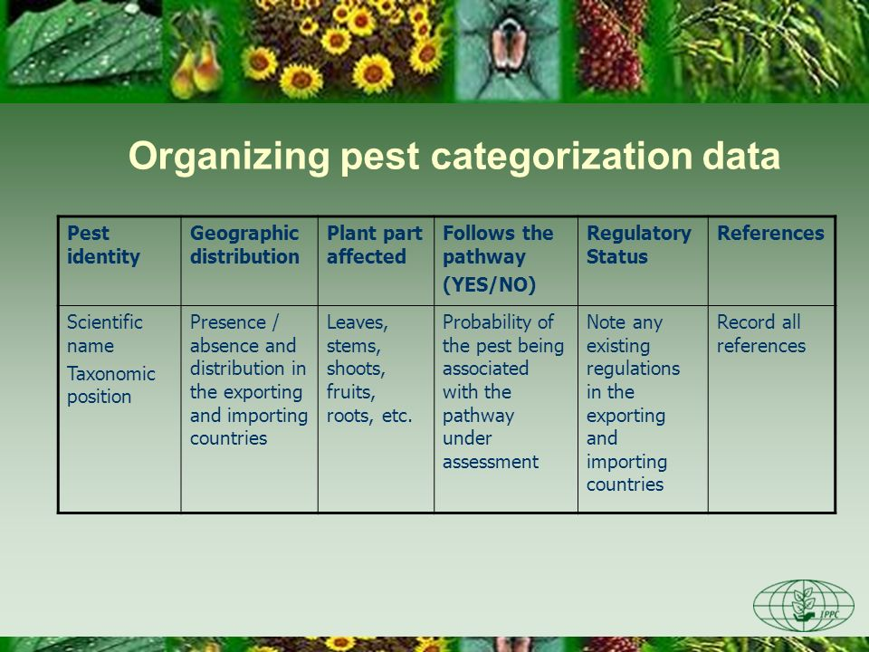Pest identity Geographic distribution Plant part affected Follows the pathway (YES/NO) Regulatory Status References Scientific name Taxonomic position