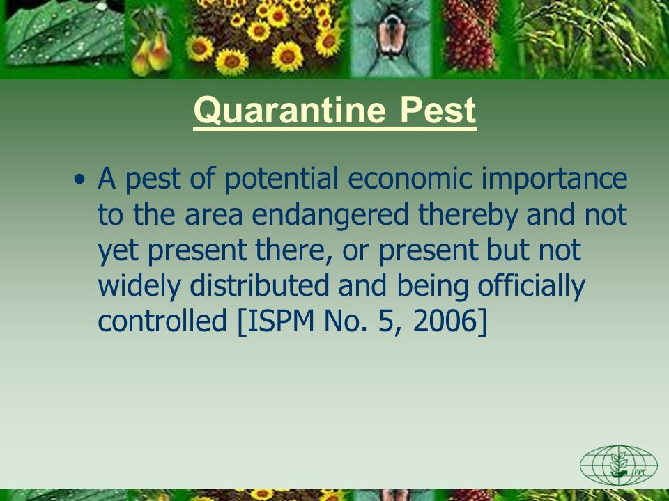 A pest of potential economic importance to the area endangered thereby and not yet present there, or present but not widely distributed and being offi