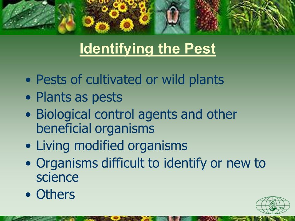 Identifying the Pest Pests of cultivated or wild plants Plants as pests Biological control agents and other beneficial organisms Living modified organisms Organisms difficult to identify or new to science Others