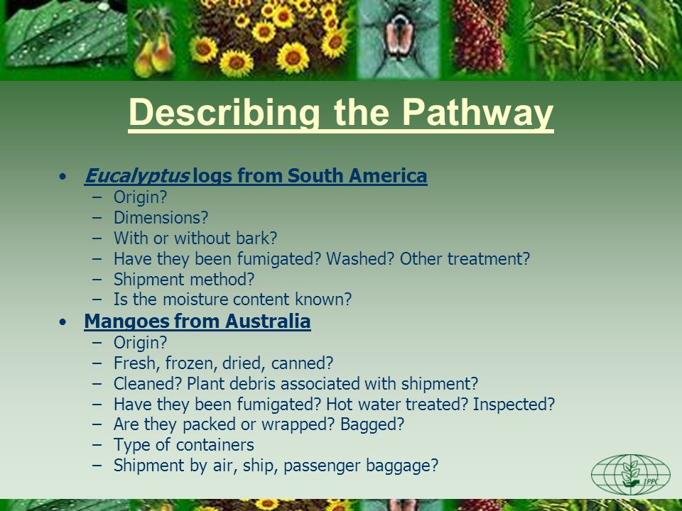 Describing the Pathway Eucalyptus logs from South America –Origin.