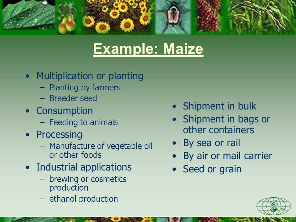 Example: Maize Multiplication or planting –Planting by farmers –Breeder seed Consumption –Feeding to animals Processing –Manufacture of vegetable oil or other foods Industrial applications –brewing or cosmetics production –ethanol production Shipment in bulk Shipment in bags or other containers By sea or rail By air or mail carrier Seed or grain
