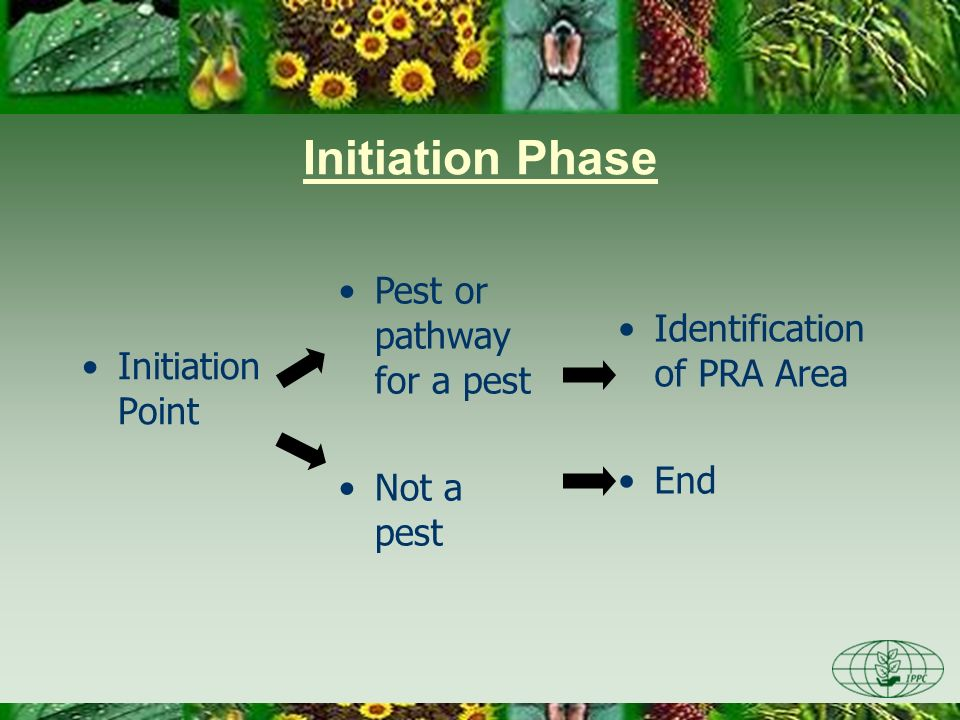Initiation Phase Initiation Point Identification of PRA Area End Pest or pathway for a pest Not a pest