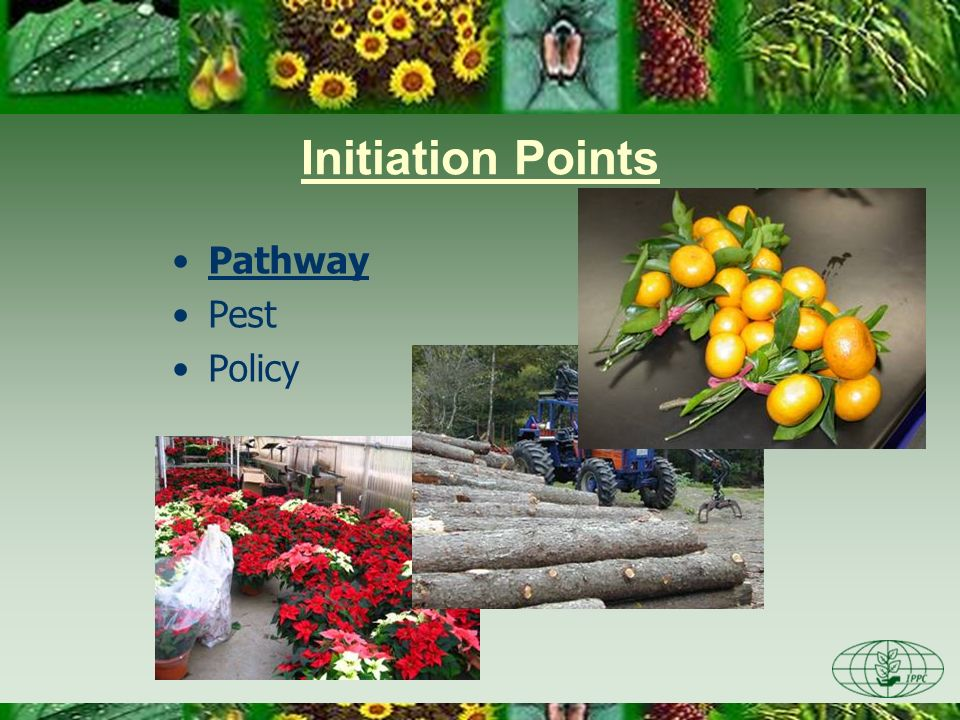 an NPPO decides to review an existing policy, phytosanitary regulation, requirements or operations –changes in agricultural production in the NPPO mean that an existing policy is no longer appropriate –an eradication program is underway and the NPPO wishes to review its progress & adjust the program, if necessary –there are repeated interceptions of regulated pests on an imported commodity for which an import policy is in place phytosanitary regulations and import policies may be updated, as needed, for many reasons