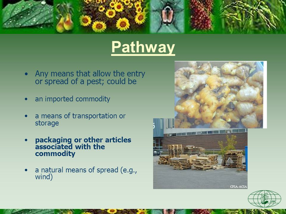 Pathway Any means that allow the entry or spread of a pest; could be an imported commodity a means of transportation or storage packaging or other articles associated with the commodity a natural means of spread (e.g., wind)