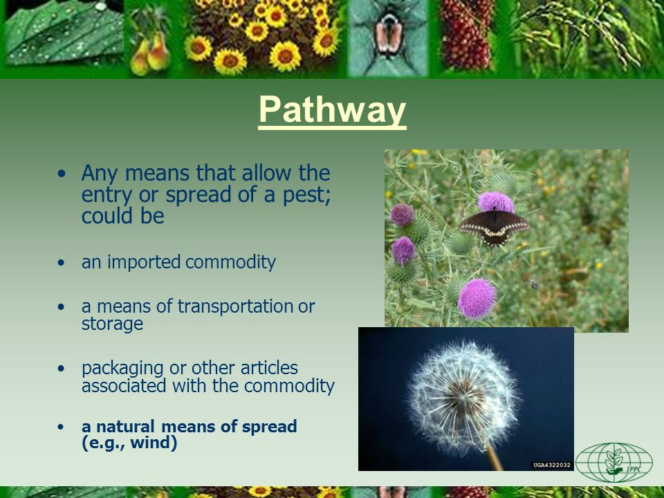 End of Stage 1 Issue is identified Information is gathered –Organism is determined to be a pest –Pathway is described Initiation point is documented PRA Area is defined Existing PRAs (if any) have been retrieved