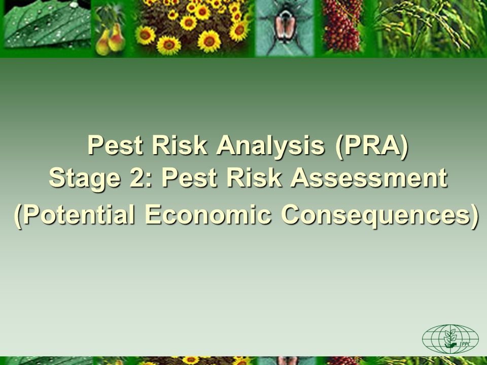 Pest Risk Analysis (PRA) Stage 2: Pest Risk Assessment (Potential Economic Consequences)