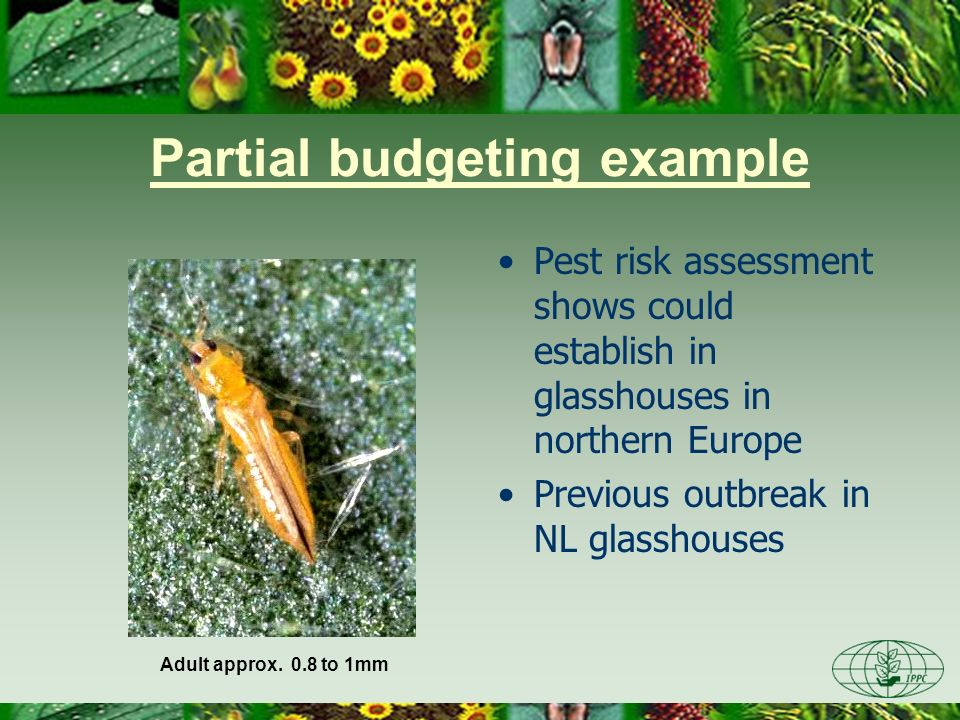 Partial budgeting example Pest risk assessment shows could establish in glasshouses in northern Europe Previous outbreak in NL glasshouses Adult appro