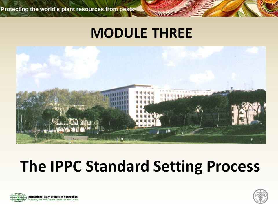 MODULE THREE The IPPC Standard Setting Process