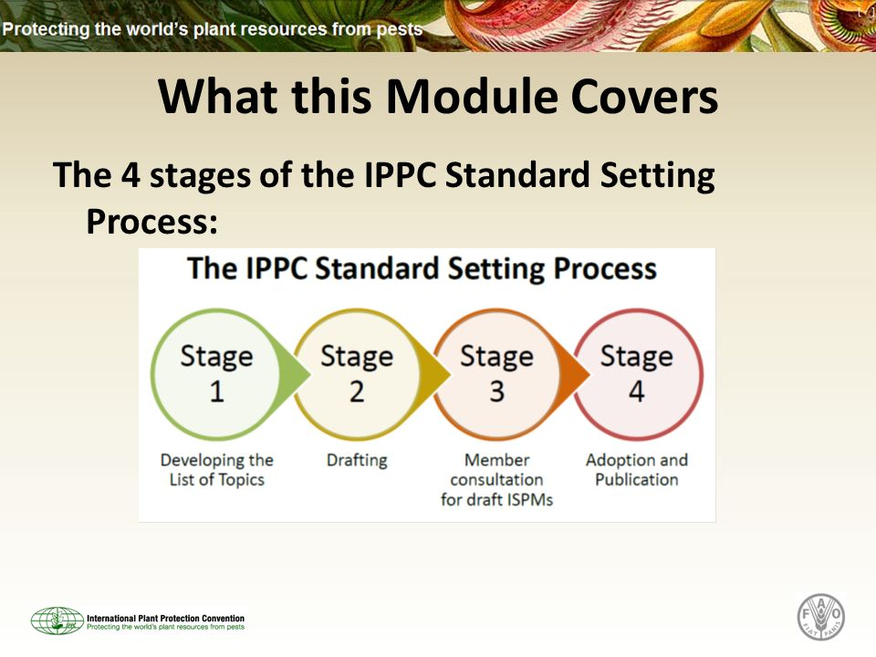 What this Module Covers The 4 stages of the IPPC Standard Setting Process:
