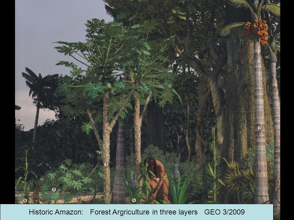 Historic Amazon: Forest Argriculture in three layers GEO 3/2009
