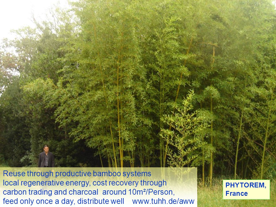 Reuse through productive bamboo systems local regenerative energy, cost recovery through carbon trading and charcoal around 10m²/Person, feed only once a day, distribute well www.tuhh.de/aww PHYTOREM, France