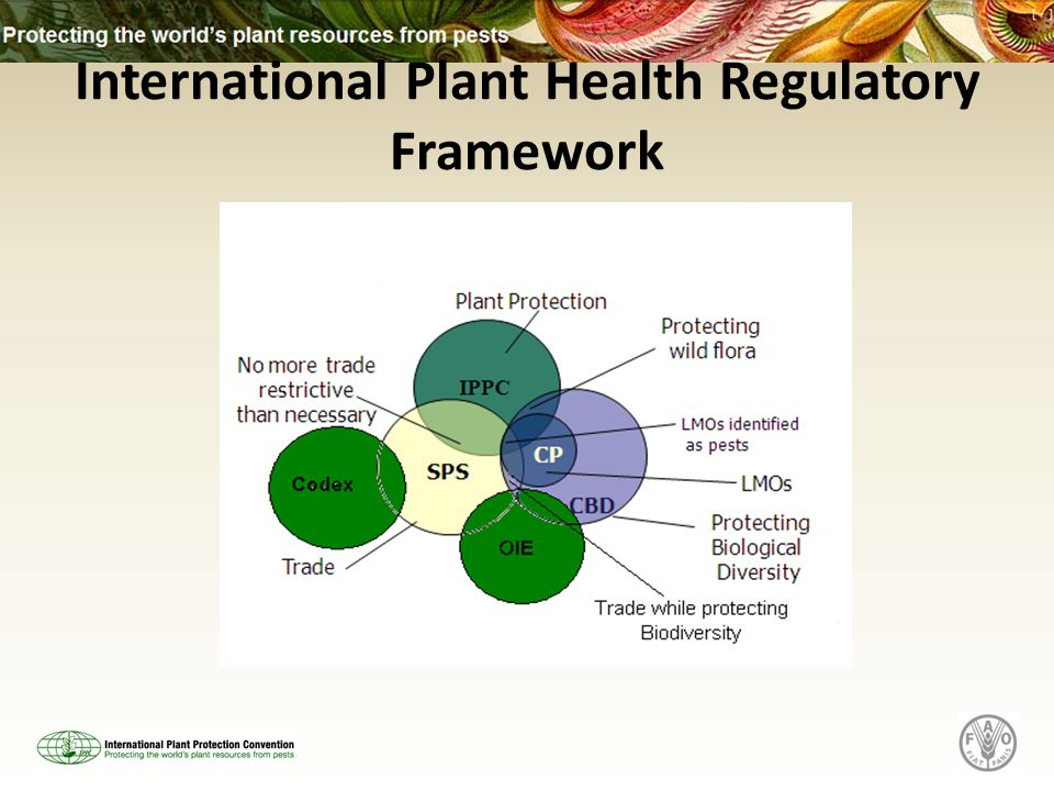 International Plant Health Regulatory Framework