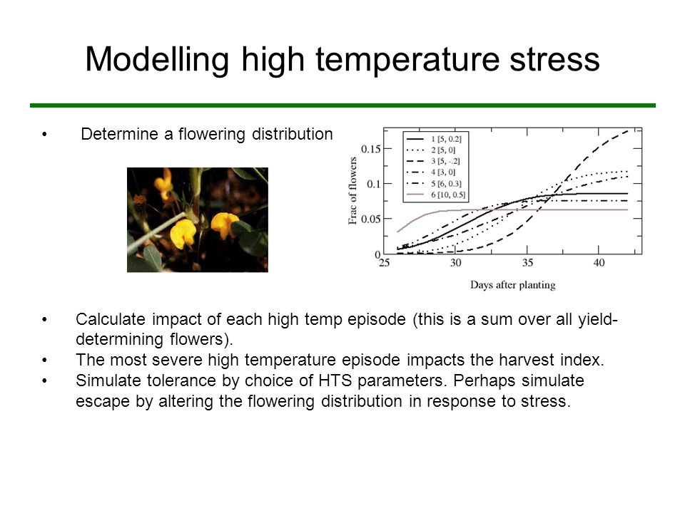 Modelling high temperature stress Determine a flowering distribution Calculate impact of each high temp episode (this is a sum over all yield- determining flowers).