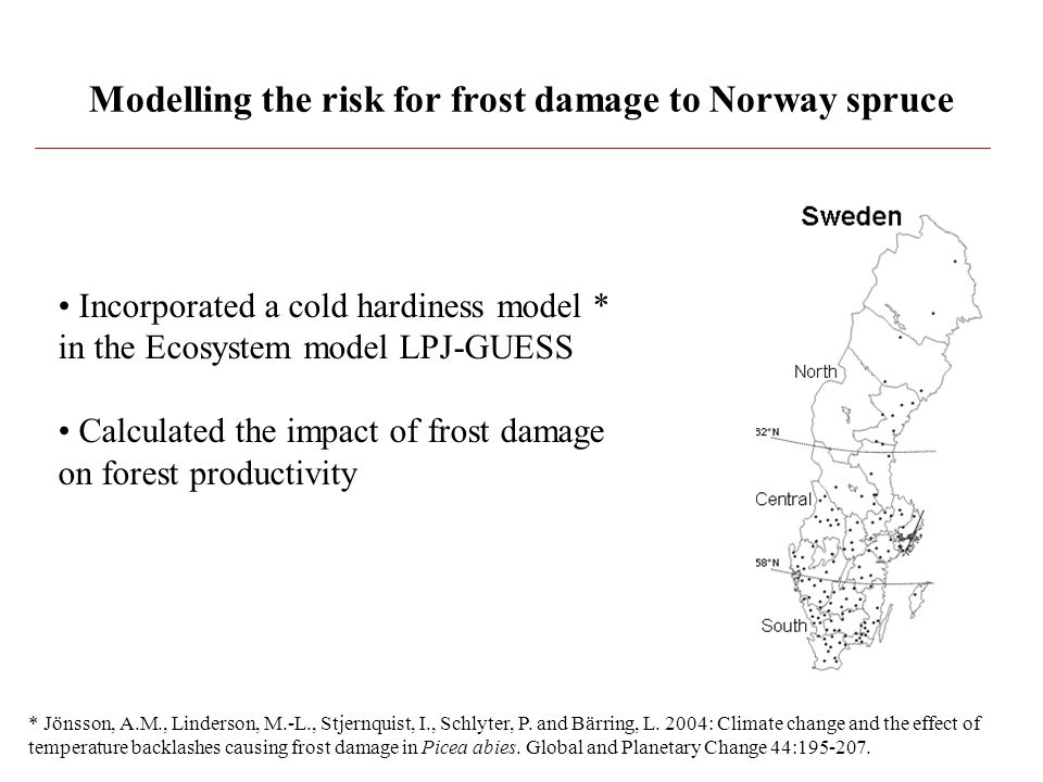 Modelling the risk for frost damage to Norway spruce Incorporated a cold hardiness model * in the Ecosystem model LPJ-GUESS Calculated the impact of frost damage on forest productivity * Jönsson, A.M., Linderson, M.-L., Stjernquist, I., Schlyter, P.