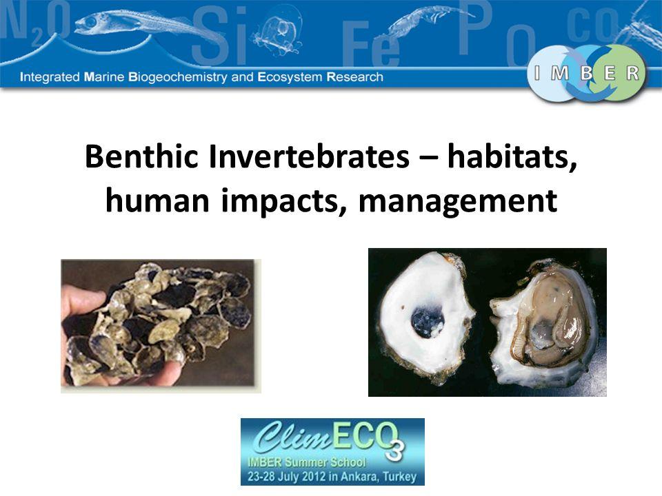 Presentation Outline Importance of benthic invertebrates Population based model Approach Limitations Individual based model Approach Combining with population model Genetic variability Concluding Remarks