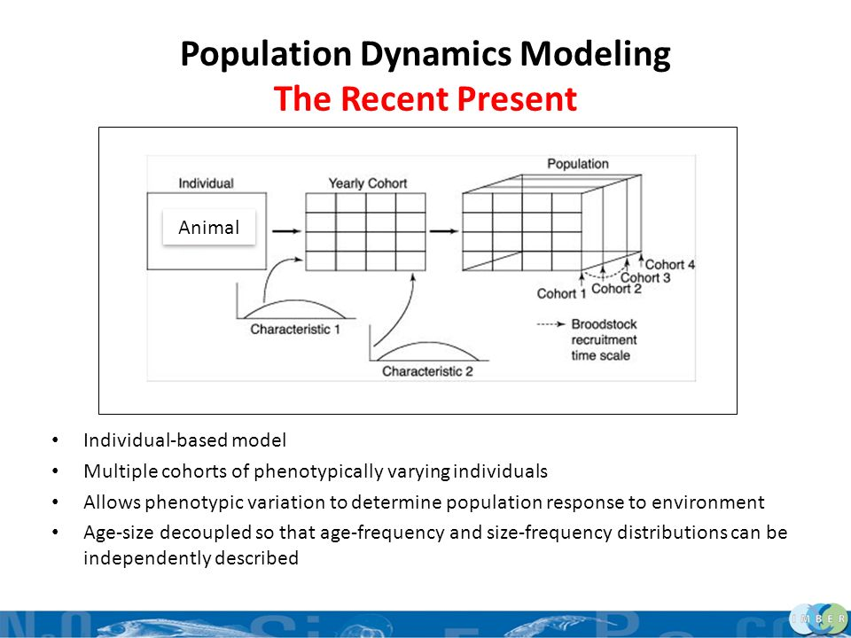 Population Dynamics Modeling The Recent Present Individual-based model Multiple cohorts of phenotypically varying individuals Allows phenotypic variat