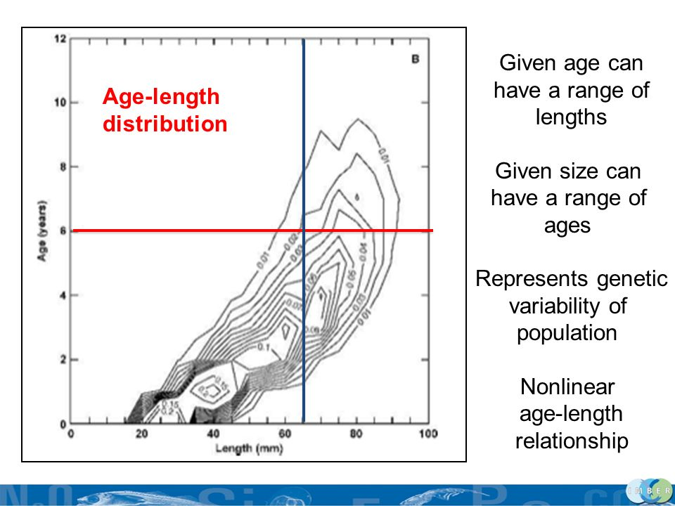 Given age can have a range of lengths Given size can have a range of ages Represents genetic variability of population Nonlinear age-length relationsh