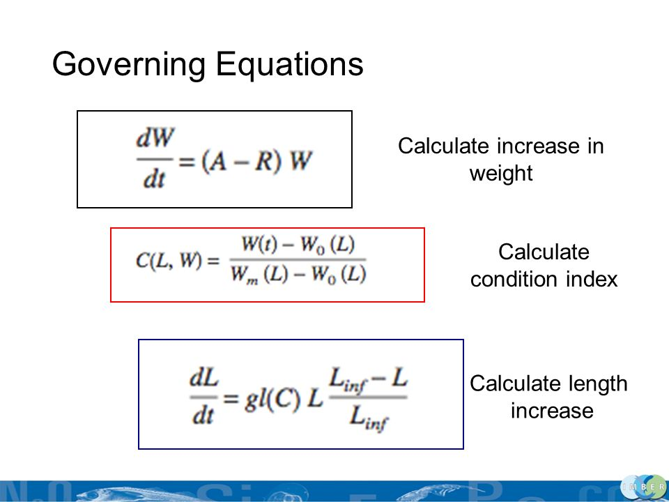 Governing Equations Calculate increase in weight Calculate condition index Calculate length increase