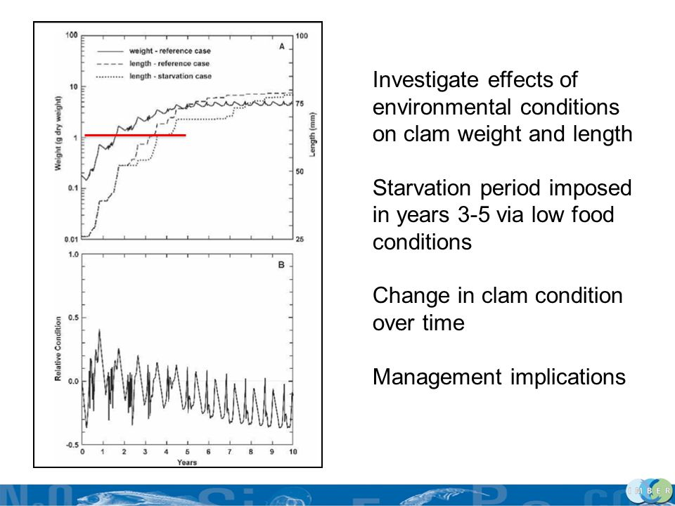 Investigate effects of environmental conditions on clam weight and length Starvation period imposed in years 3-5 via low food conditions Change in cla