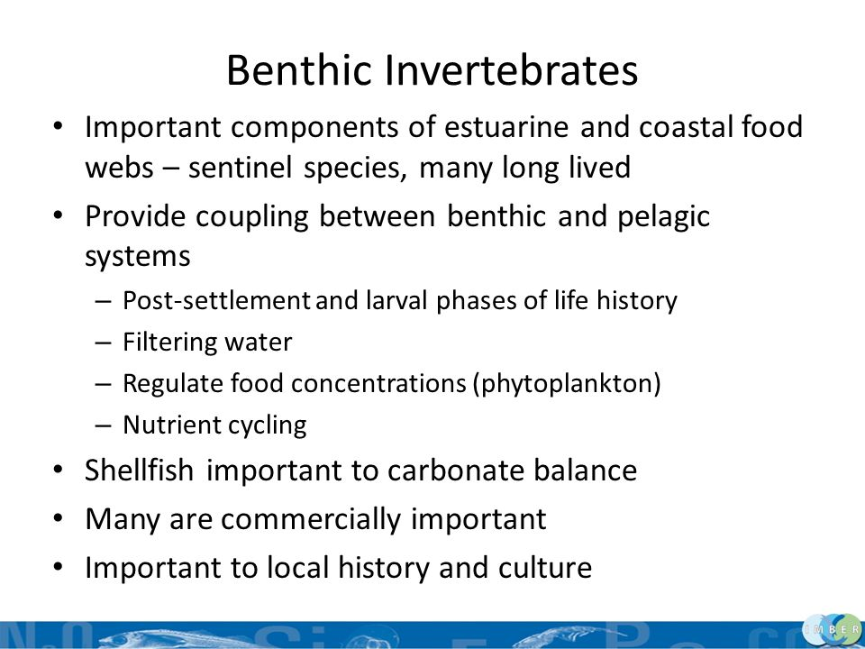 Benthic Invertebrates Important components of estuarine and coastal food webs – sentinel species, many long lived Provide coupling between benthic and