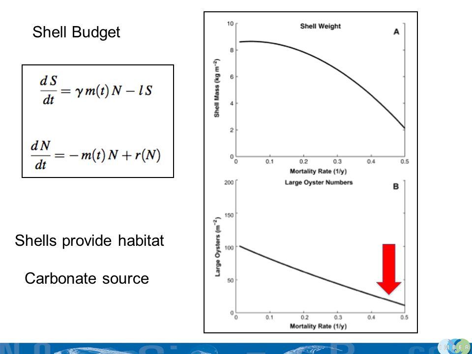 Shell Budget Shells provide habitat Carbonate source