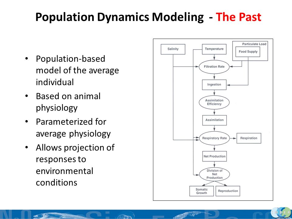Aspects of Population Dynamics Animal grows Somatic tissue Reproductive tissue Reproduces – biological and environmental cues Environmental inputs Animal filtration rate sets up assimilation and respiration Animal can gain and loose mass Model usually in terms of energy or carbon