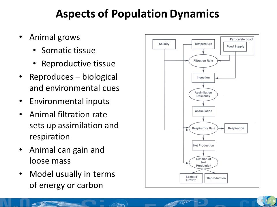 Aspects of Population Dynamics Animal grows Somatic tissue Reproductive tissue Reproduces – biological and environmental cues Environmental inputs Ani