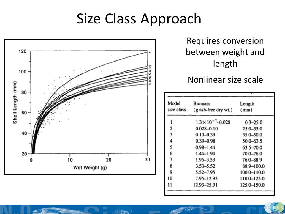 Size Class Model – Governing Equation Net production NP j = P gj + P rj = A j – R j j = size class dO j /dt = P gj + P rj + gain j-1 – loss j+1 Gain and loss are inputs from current size class to/from larger and smaller size classes Transfers scaled by animal weight so mass and energy are conserved in terms of animal numbers