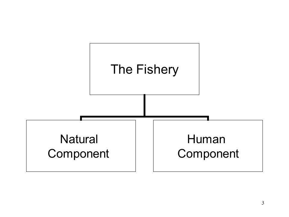 3 The Fishery Natural Component Human Component