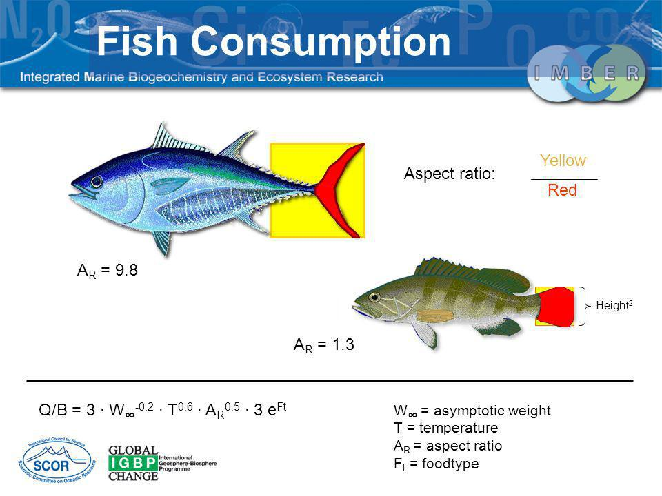 Q/B = 3 · W -0.2 · T 0.6 · A R 0.5 · 3 e Ft W = asymptotic weight T = temperature A R = aspect ratio F t = foodtype Aspect ratio: Yellow Red A R = 9.8 A R = 1.3 Height 2 Fish Consumption