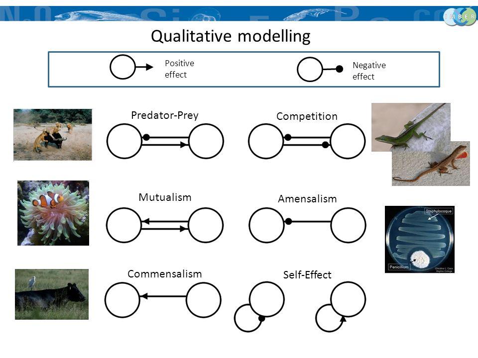 Predator-Prey Mutualism Commensalism Competition Amensalism Self-Effect Qualitative modelling Positive effect Negative effect