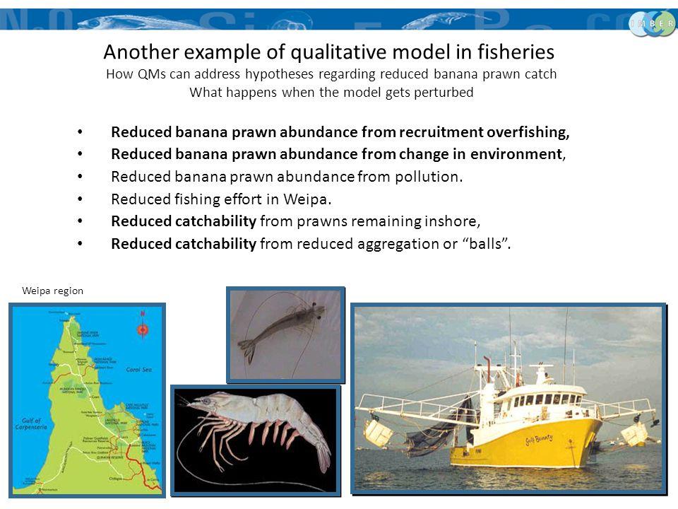 Reduced banana prawn abundance from recruitment overfishing, Reduced banana prawn abundance from change in environment, Reduced banana prawn abundance