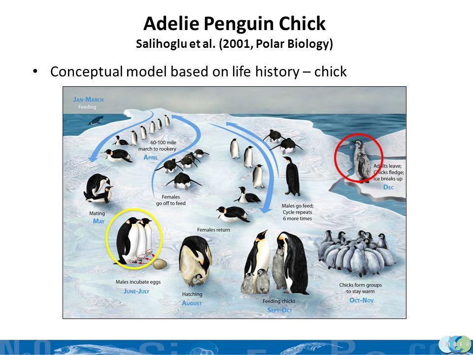 Adelie Penguin Chick Salihoglu et al. (2001, Polar Biology) Conceptual model based on life history – chick