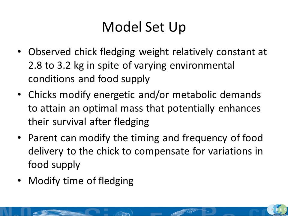 Model Set Up Observed chick fledging weight relatively constant at 2.8 to 3.2 kg in spite of varying environmental conditions and food supply Chicks m