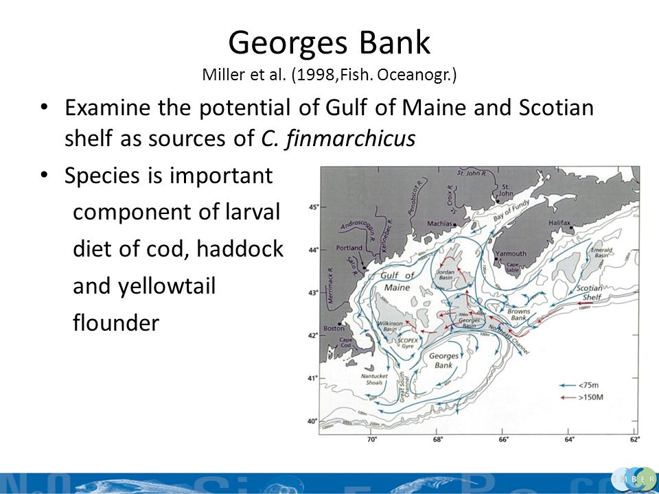 Georges Bank Miller et al. (1998,Fish. Oceanogr.) Examine the potential of Gulf of Maine and Scotian shelf as sources of C. finmarchicus Species is im