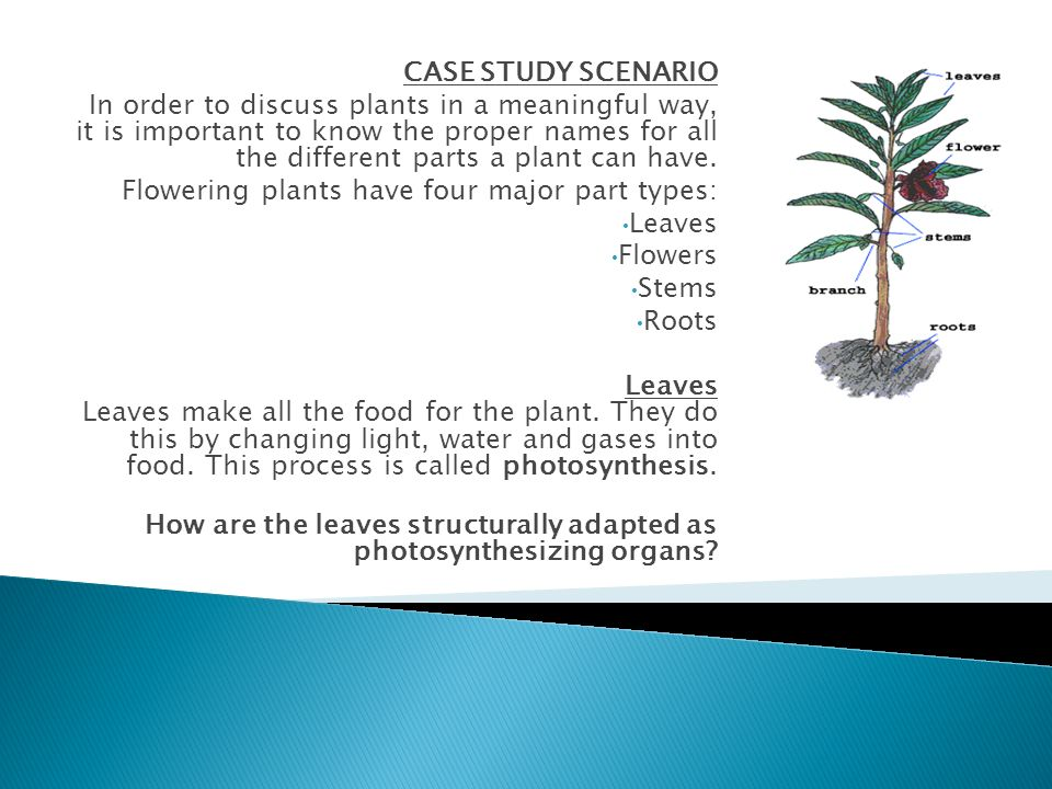 CASE STUDY SCENARIO In order to discuss plants in a meaningful way, it is important to know the proper names for all the different parts a plant can h