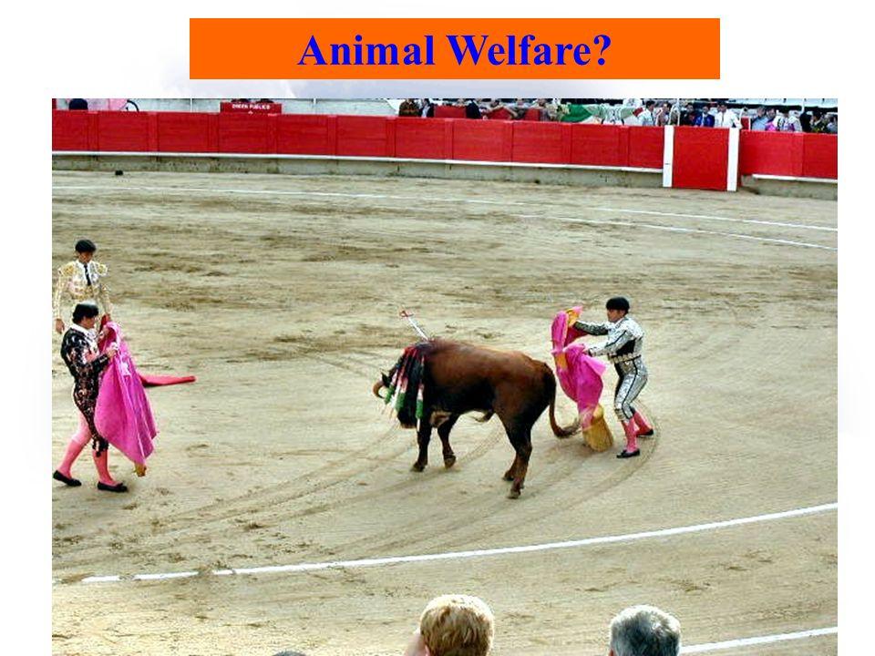Animal Welfare?