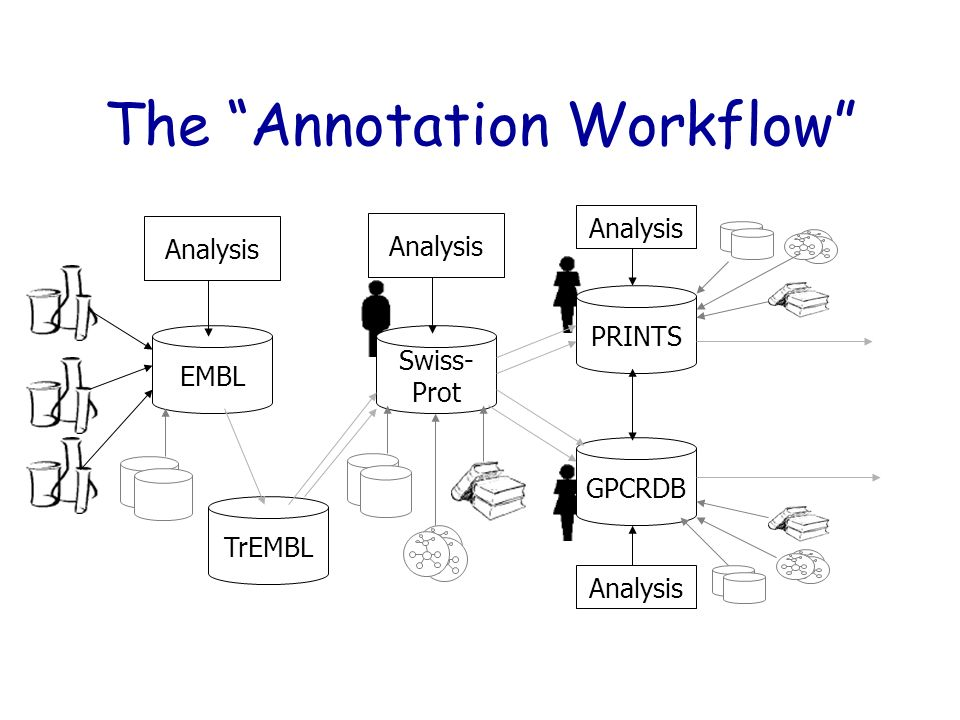 The Annotation Workflow EMBL Swiss- Prot PRINTS Analysis GPCRDB Analysis TrEMBL Analysis