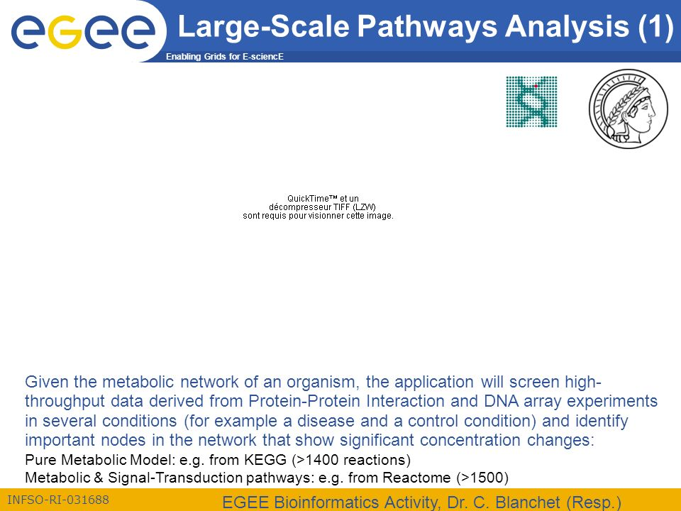 Enabling Grids for E-sciencE INFSO-RI-031688 EGEE Bioinformatics Activity, Dr.
